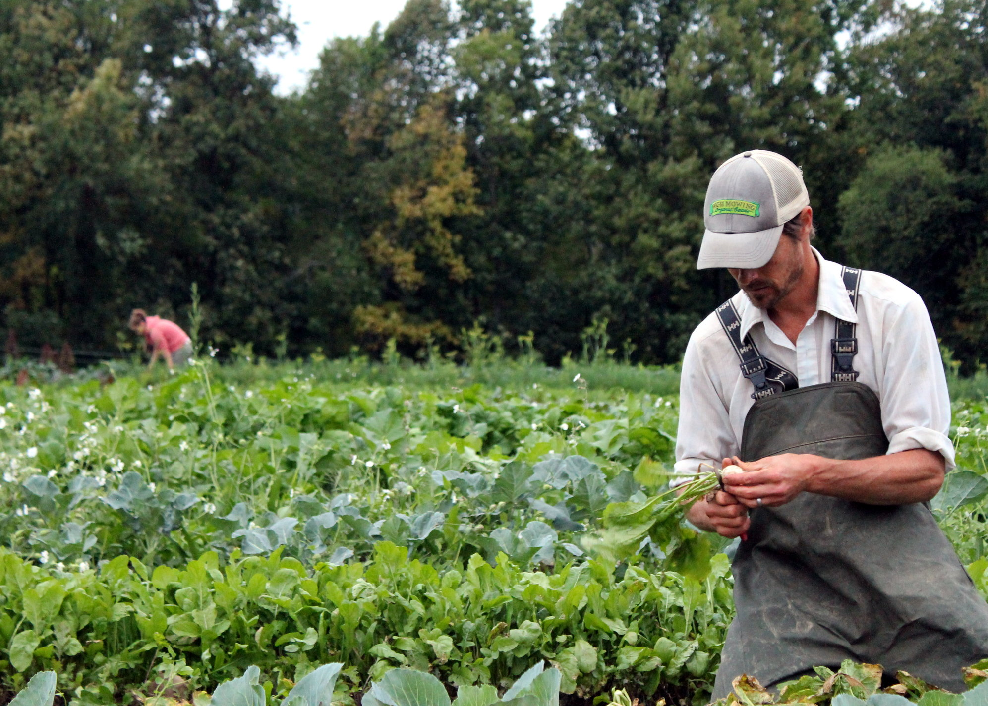 Real farm job problem politicion never tell you and why ?